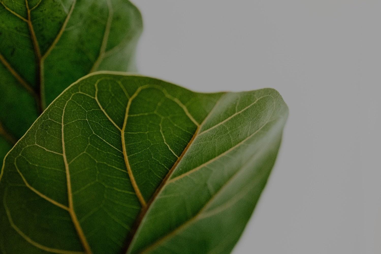 slider-dunkerque-grande-synthe-plantes-medicinales
